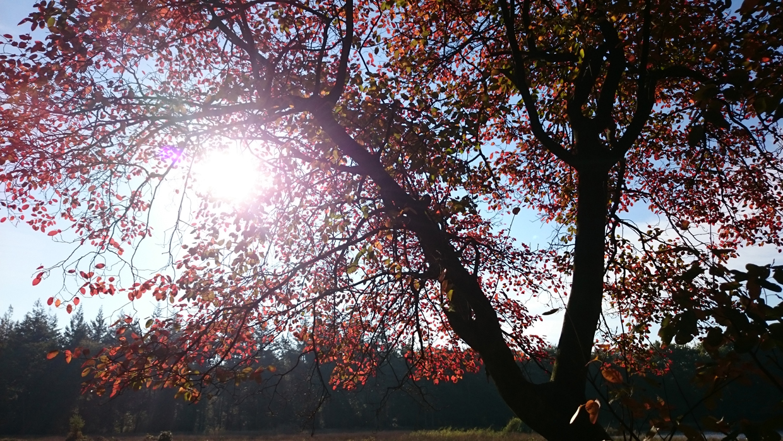 cest-la-vie-huis-herfst